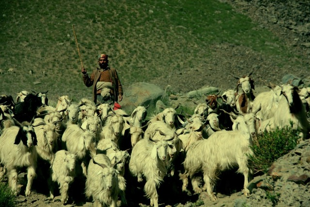 shepherd-489292_960_720