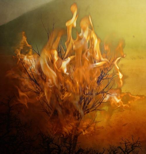 moses_burning-bush