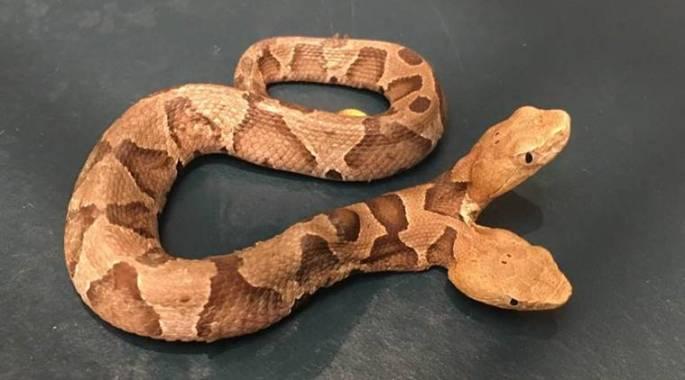 two-headed-snake_759_fb