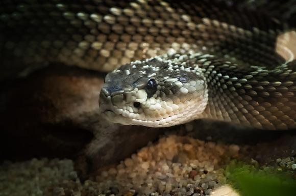 reptile-5043671_960_720